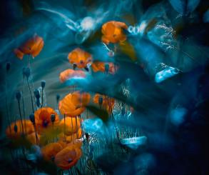 Fotógrafa registra detalhes da natureza que mais parecem contos de fadas