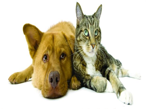 Santa Cruz Shopping promove Campanha de Adoção de Cães e Gatos