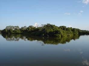 Lançamento de startup brasileira ligada à biodiversidade é destaque na COP internacional, no México