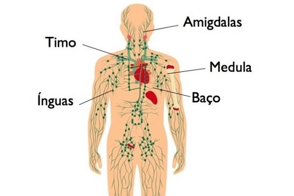 Linfomas atingem mais de 10 mil brasileiros por ano